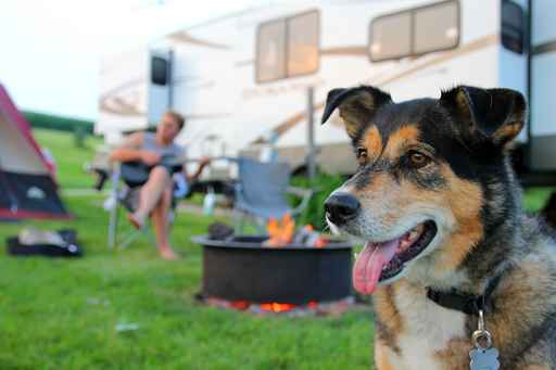 RV and Pet Insurance
